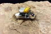 cyborg-roach