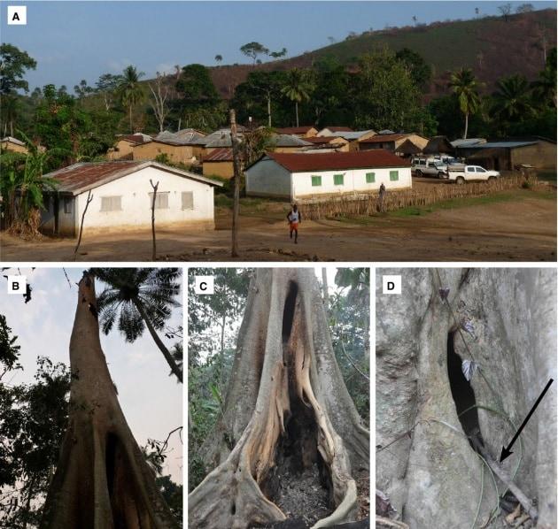Ebola, ecco il luogo da cui (forse) partì l'epidemia