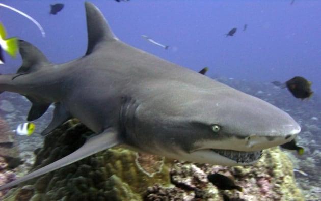 I 10 squali dai nomi più improbabili