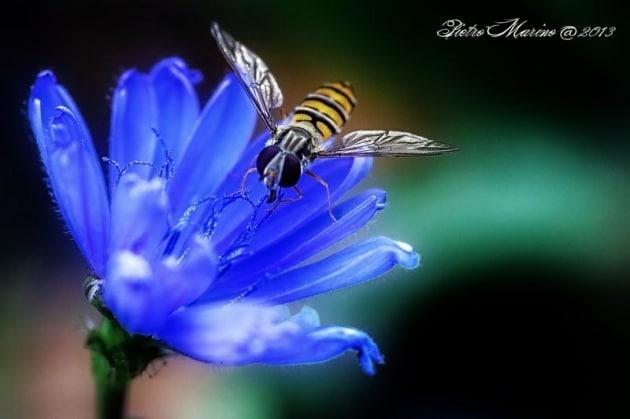 Il piccolo grande mondo degli insetti di Pietro Marino
