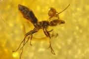acaro-e-formica
