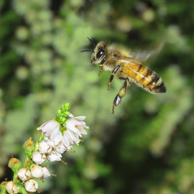 Le api atterrano col