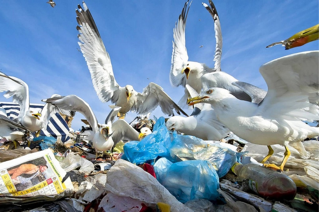 Meno rifiuti e meno sprechi: è il tema europeo dell'anno