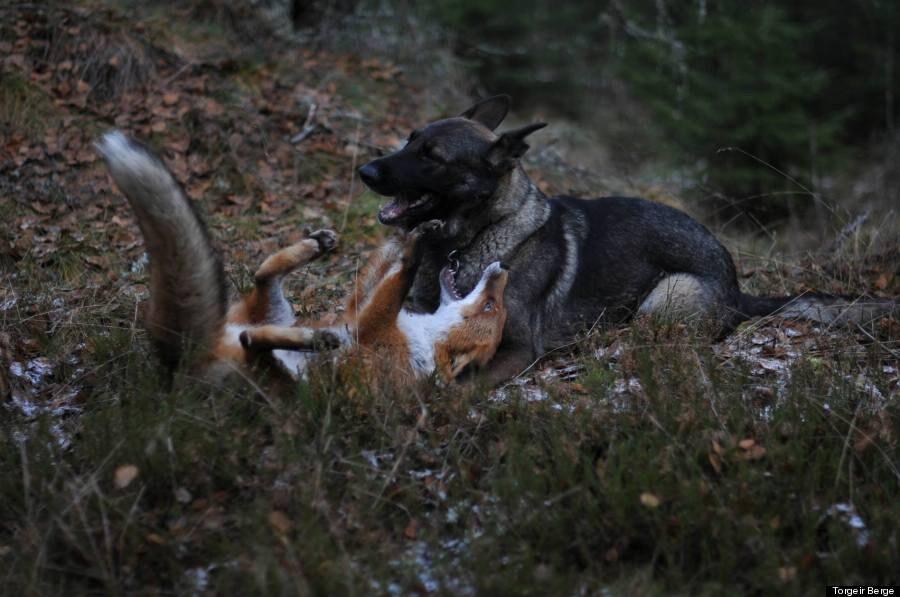 Paolo rossi piero il pastore che lotta coi lupi