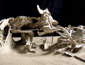 preistoria, fossili, infanzia, bambini