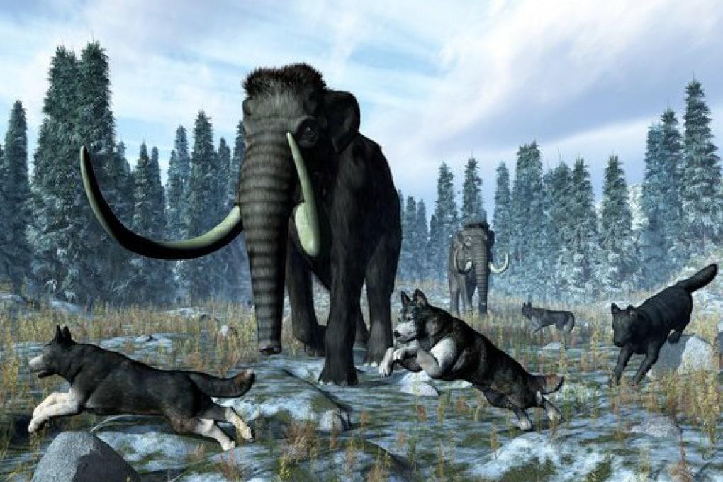 Chi ha ucciso i grandi animali del passato?