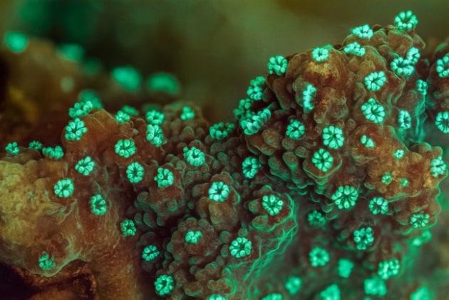 Slow Life: elogio della lentezza... subacquea
