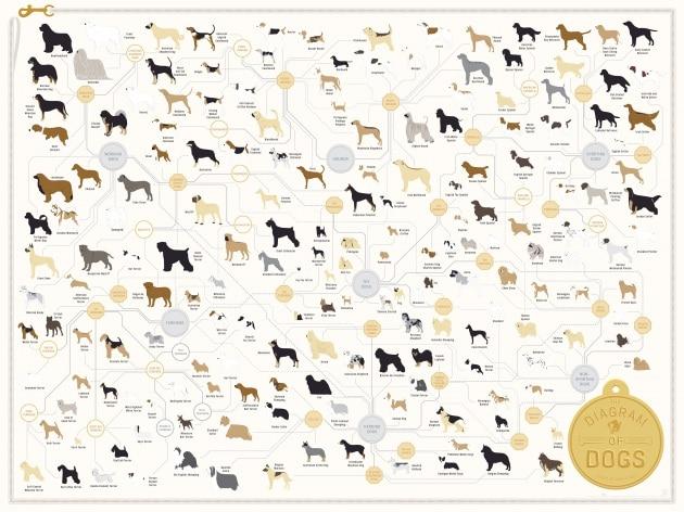 181 razze di cani in un'immagine
