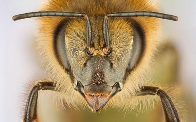 Che fine hanno fatto le api?
