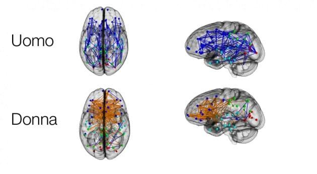 Uomini e donne hanno cervelli