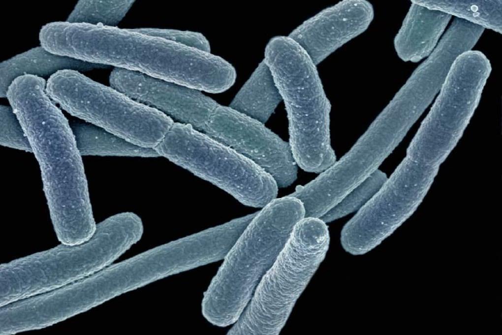 Batteri resistenti agli antibiotici: quello che c'è da sapere