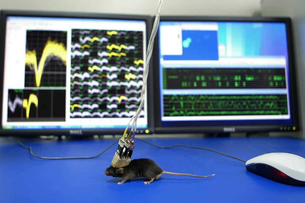 Sperimentazione animale: il sesso dei ricercatori influenza il comportamento delle cavie