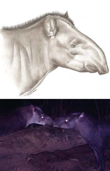 x-tapiro
