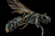 Le api riconoscono le quantità e lo zero