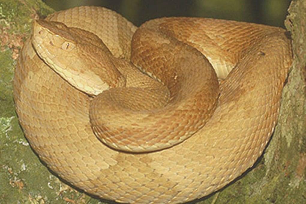 Queimada Grande, l'isola con la più alta concentrazione di serpenti velenosi al mondo