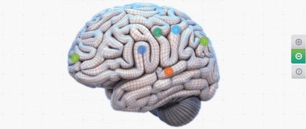 Your Brain Map: il cervello in un'infografica interattiva