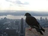 th_piccioni
