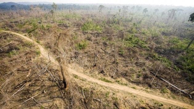 Risultati immagini per deforestazione amazzonia grafico
