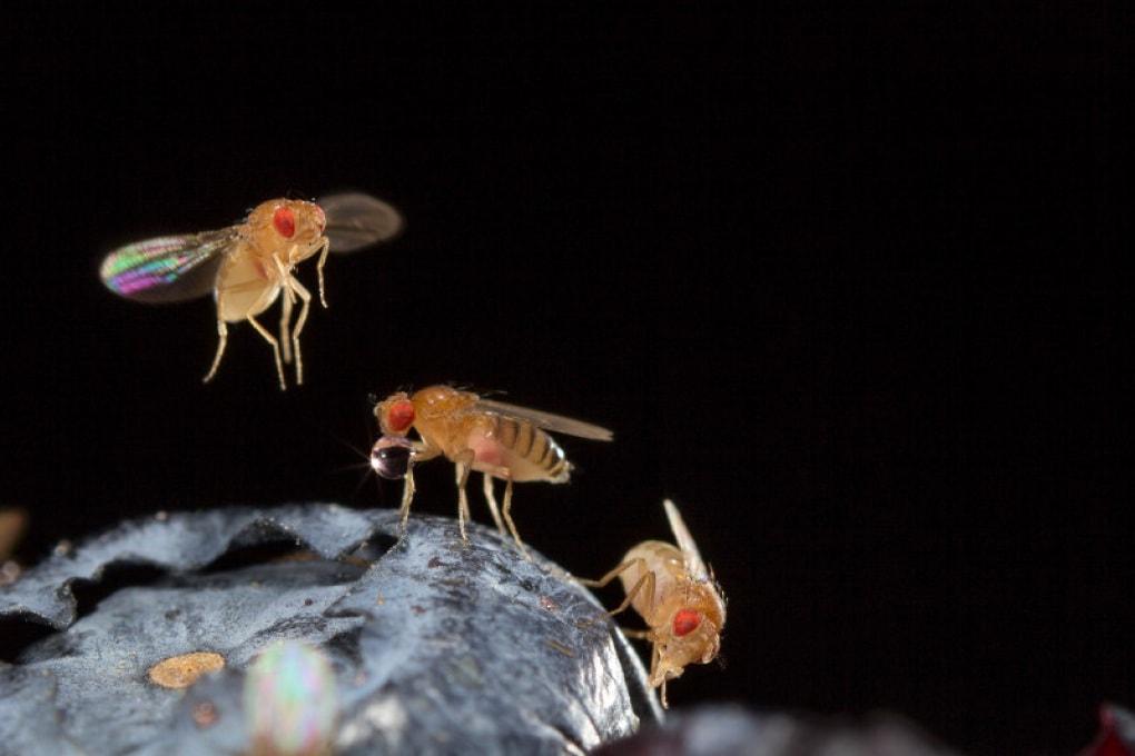 Come le mosche camminano all'indietro