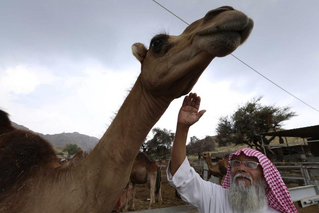 Il virus della MERS infetta anche il latte di cammello