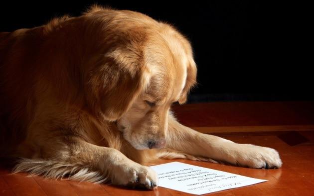 Il tuo cane è intelligente?