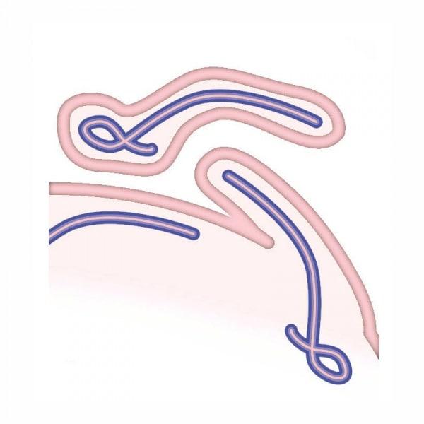 ebola-4-close