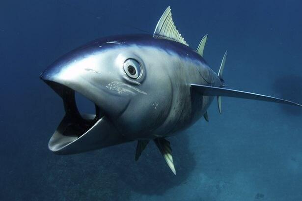 spy-tuna