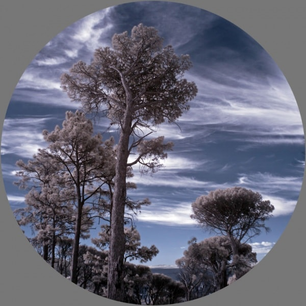 365-days-in-infrared-by-kate-davies8__880