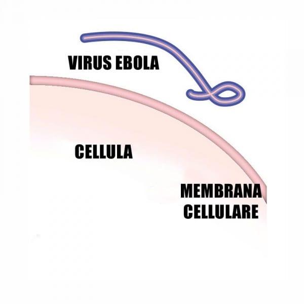 ebola-1-close