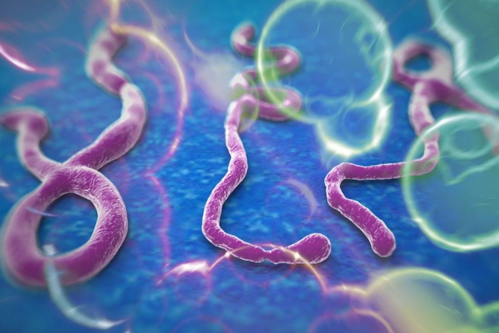 Ebola, un singolo anticorpo mette il virus ko