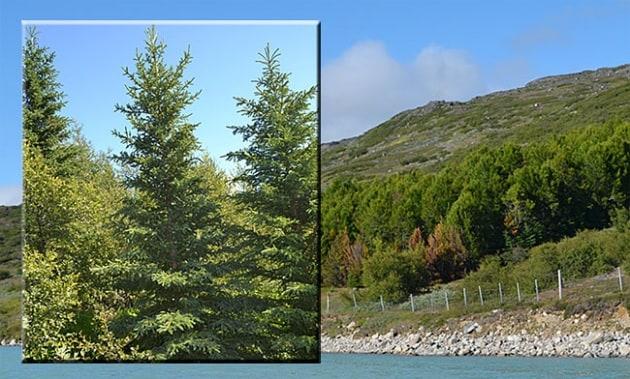 Il global warming tingerà di verde la Groenlandia
