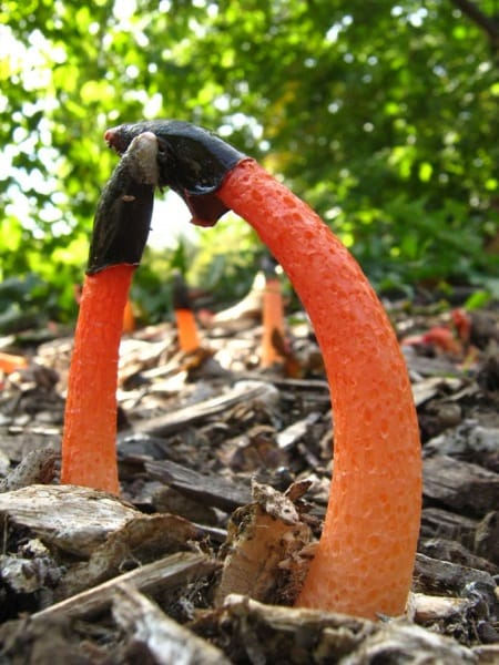 mushroom-science-fiction-or-fact-21-strangest-fungi-10