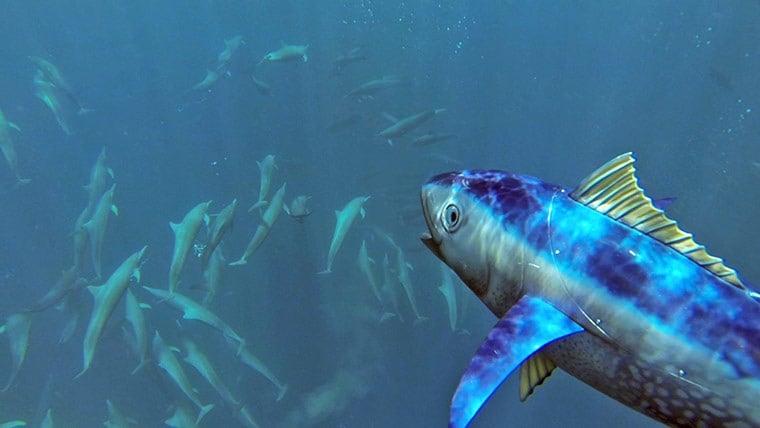 spy-tuna-008