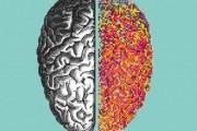 brain-mostra-milano