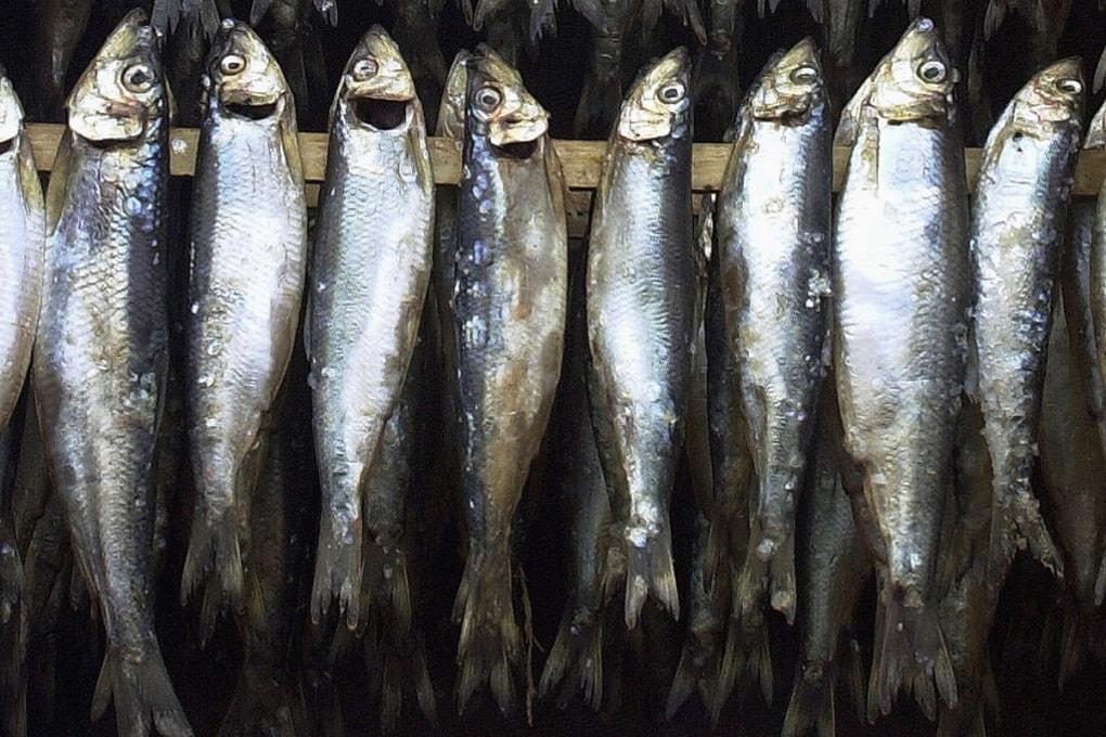 Perché il pesce puzza?