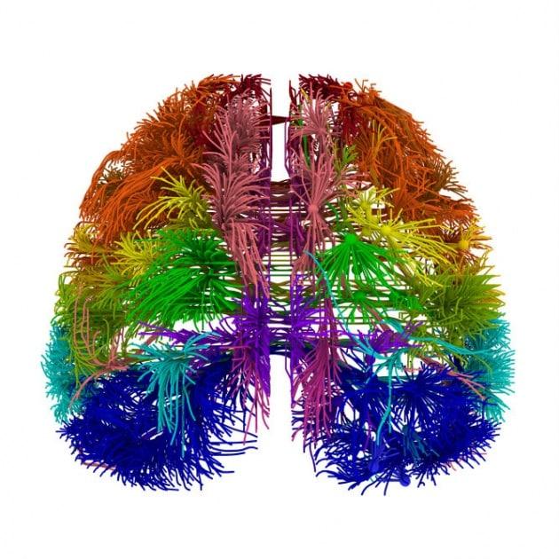 I segreti del cervello in una mappa