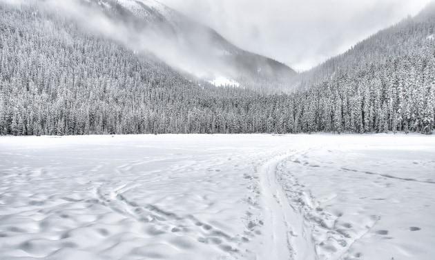 Perché la neve zittisce il mondo?