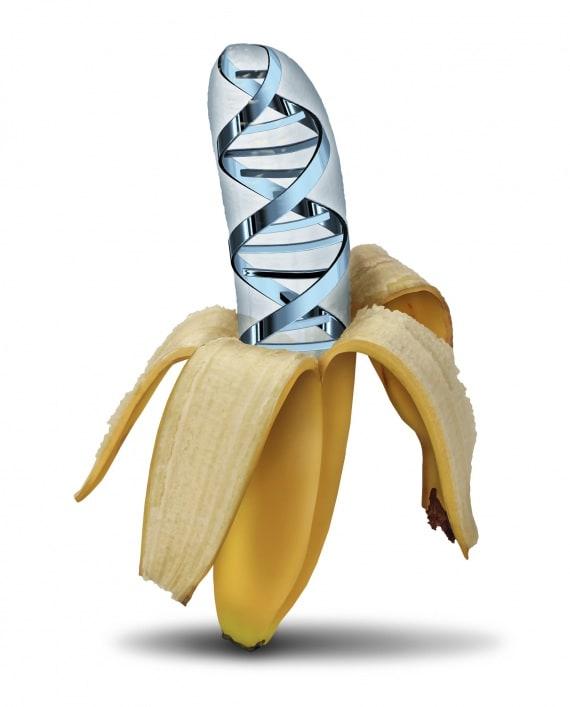 OGM, alimentazione, agricoltura, editing genetico