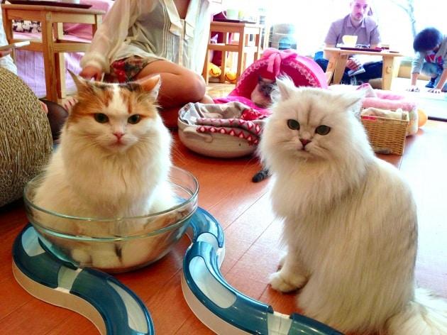 Bar da gatti