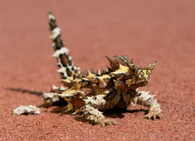 20 stratagemmi animali per sopravvivere nel deserto