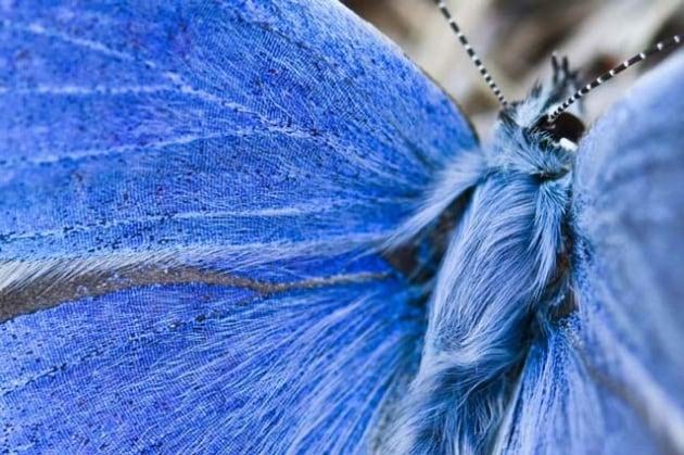 Lepidotteri: oasi per farfalle a Milano