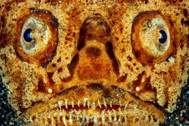 Come vedono gli animali: la struttura degli occhi