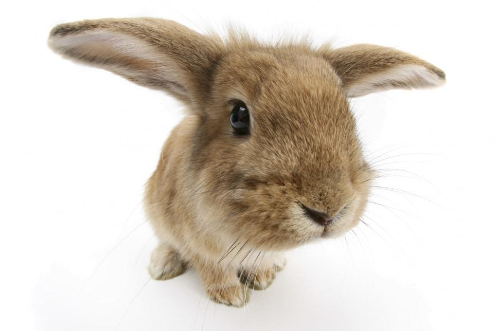 Perché si dice fare figli come conigli?