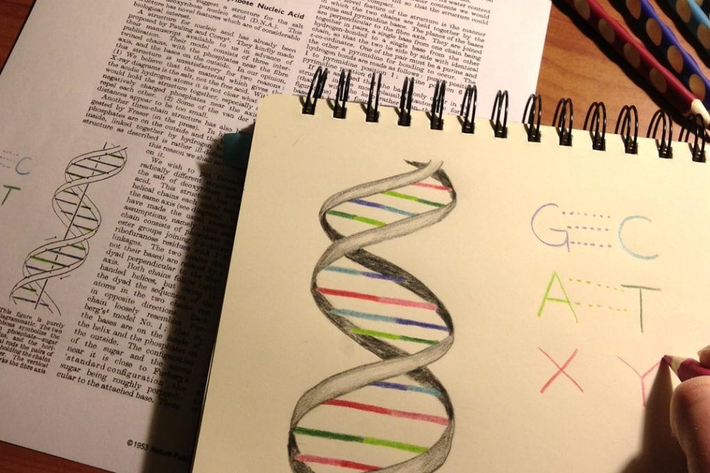 L'organismo con il codice genetico artificiale