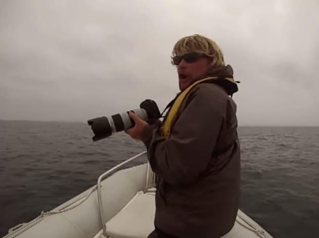 Due balenottere ribaltano la barca di un fotografo