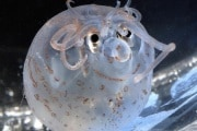 plankton_web.630x360