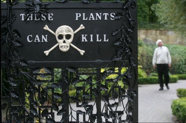 Le foto di Alnwick garden, il giardino più velenoso del mondo