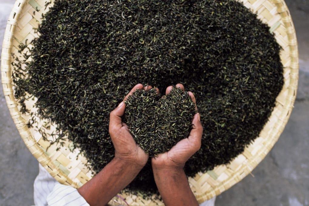 È vero che il tè Darjeeling sta finendo?
