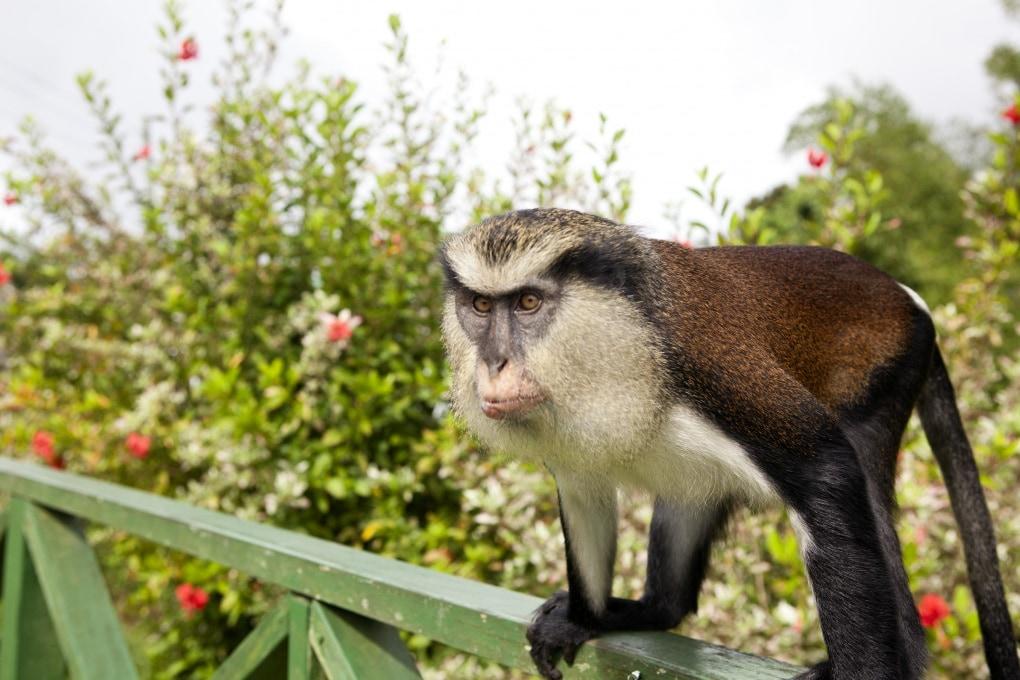 Anche le scimmie