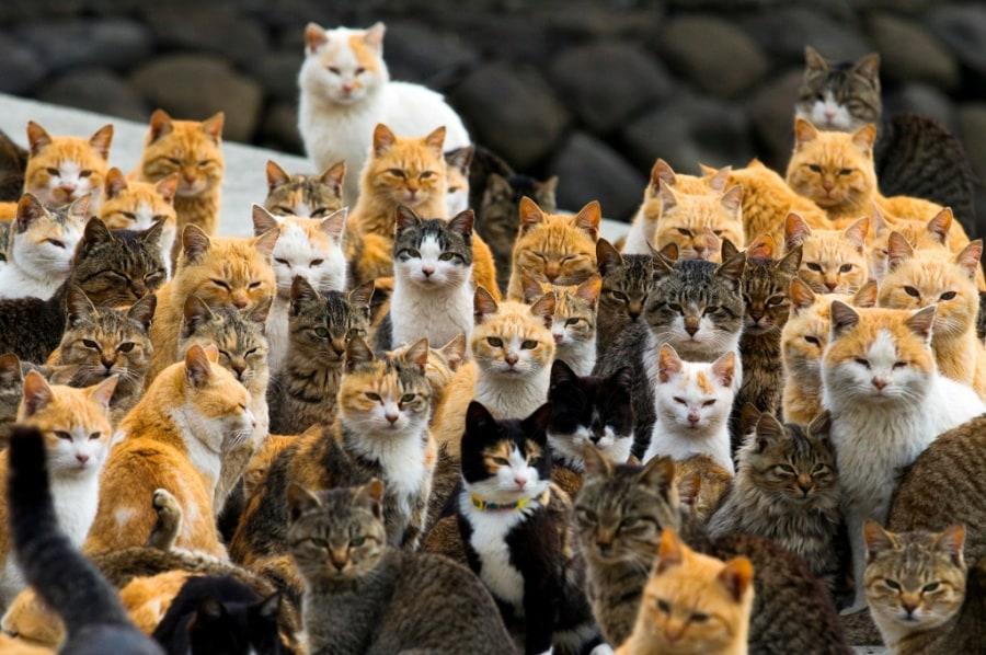 Aoshima, l'isola dei gatti (da leggere assolutamente se non l'avete già fatto!) dans GATTI GATTI ED ANCORA GATTI reu_rtr4rugt.900x600